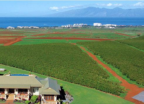 マウイ島のコーヒー農園風景